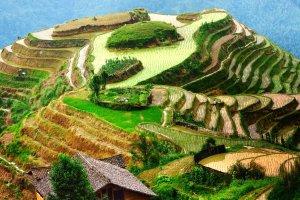Los arrozales en terraza de Longji , China