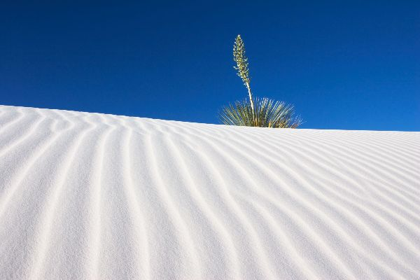 The White Sands National Monument , United States of America