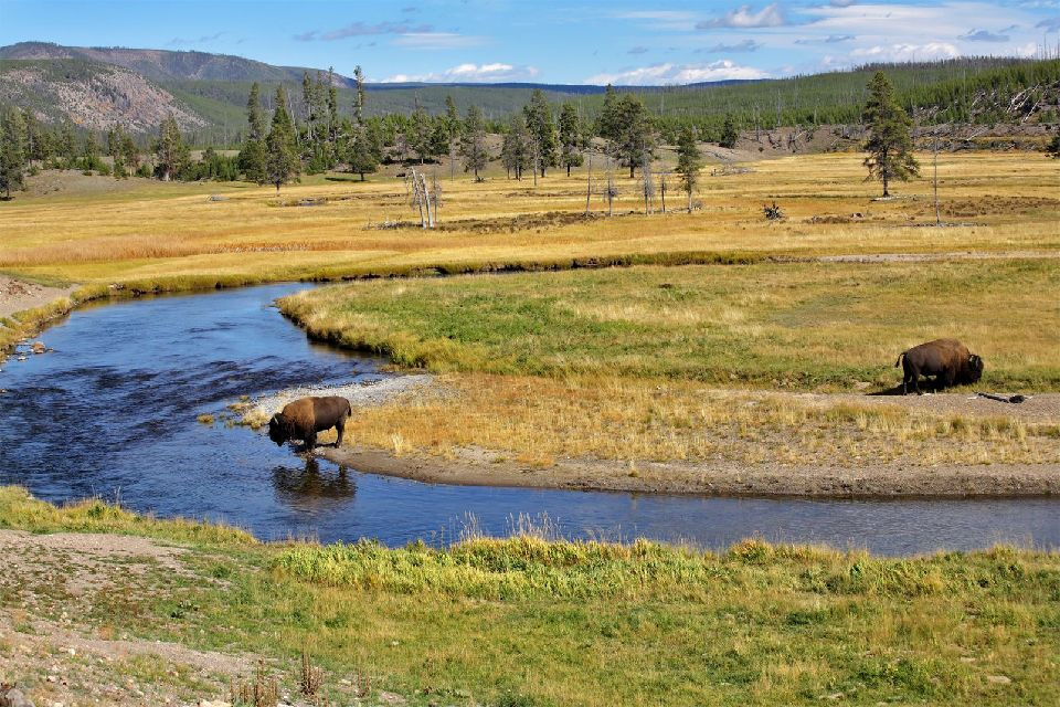 Le parc national de Yellowstone , Une faune riche et variée , Etats-Unis