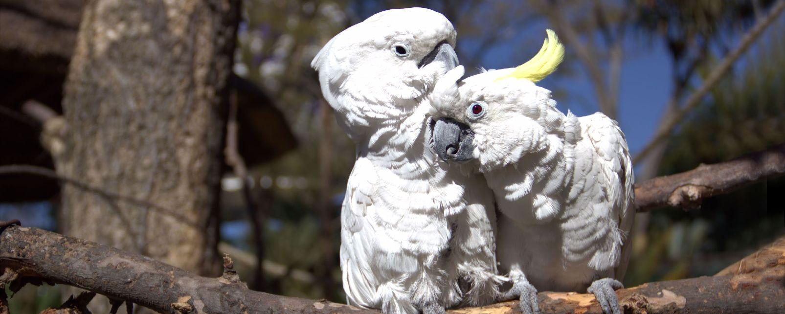 Les oiseaux , Indonésie