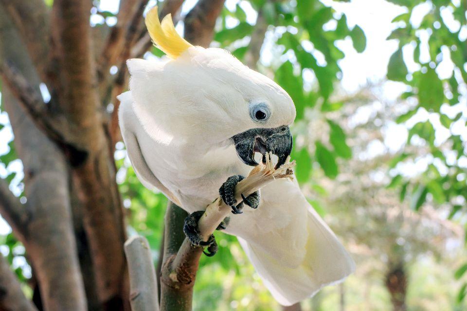 Les oiseaux , Indonesia