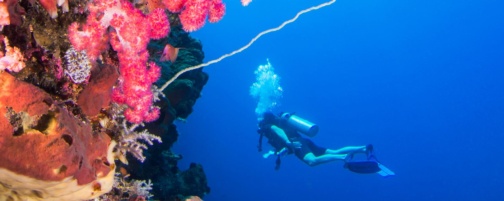 La plongée , Indonésie
