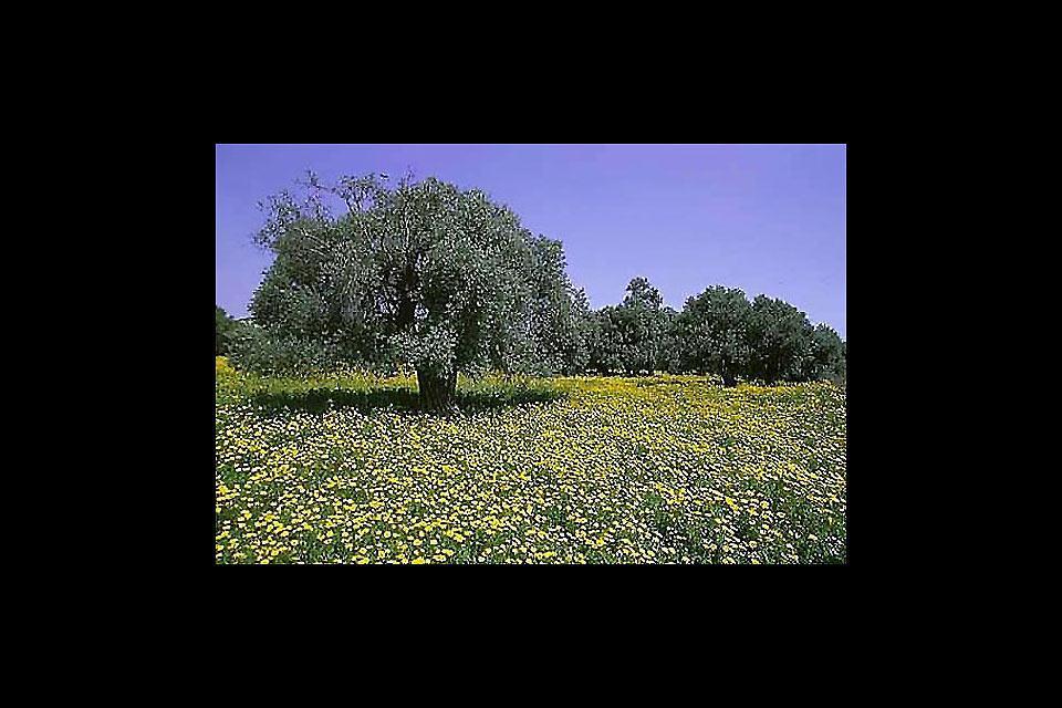 The Mésoré Plain , The Cypriot countryside , Cyprus