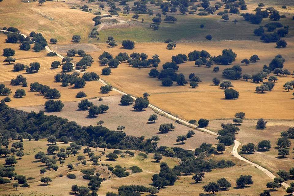 The Mésoré Plain , Landscapes of the Mesaoria region , Cyprus