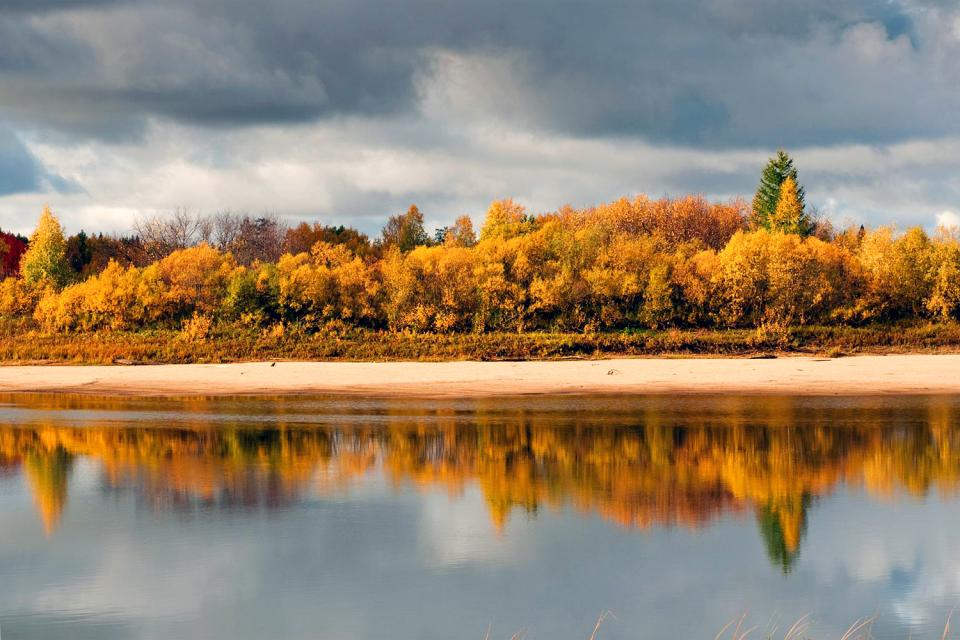 Les forêts vierges de Komi , Russie