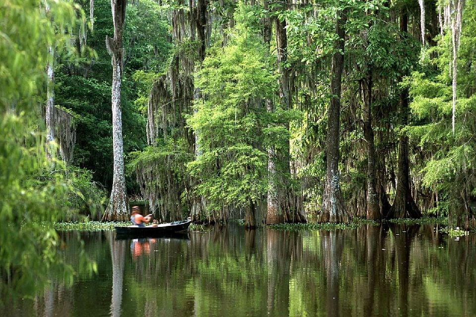 Les bayous de Louisiane , Les fôrets noyées , Etats-Unis