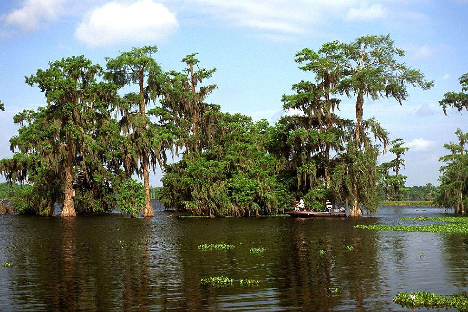 Les bayous de Louisiane , Une végétation luxuriante , Etats-Unis