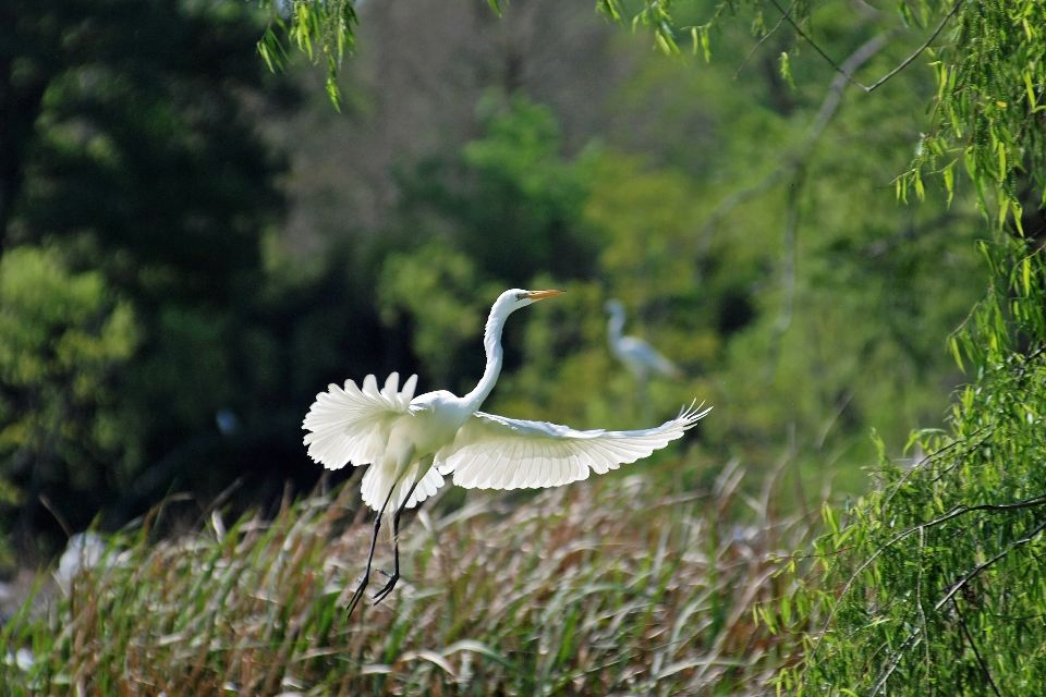 Les bayous de Louisiane , Un décor naturel de premier choix , Etats-Unis