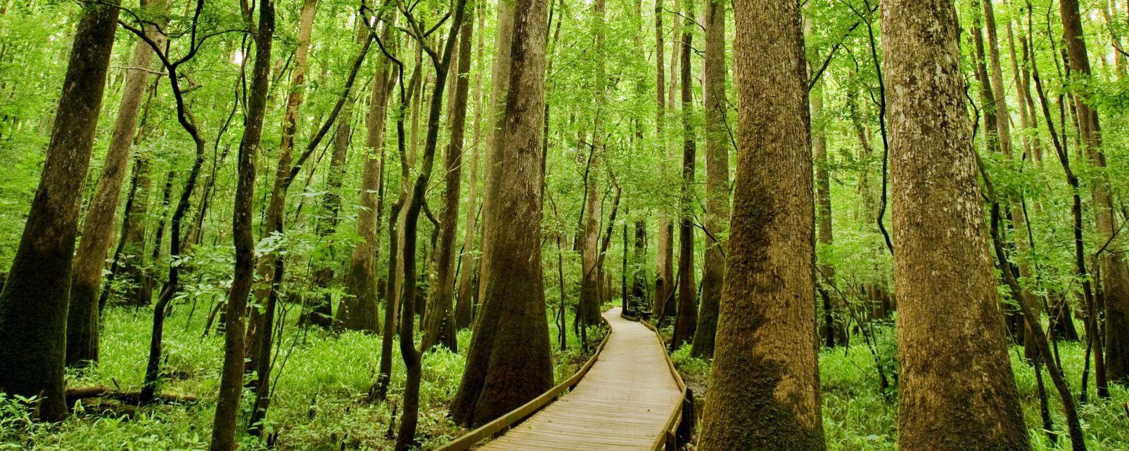 Les paysages, Horizontal, South Carolina, Leaf, Reflection, Autumn, Swamp, Lake