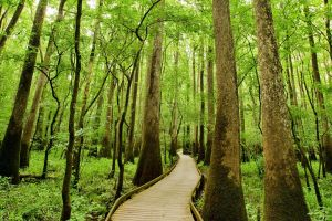 , Congaree National Park, Landscapes, Southern USA