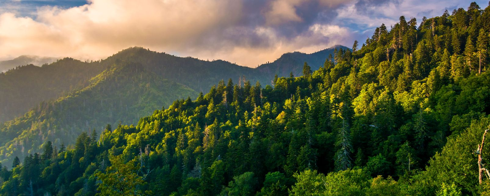 Le parc national des Great Smoky Mountains , Etats-Unis