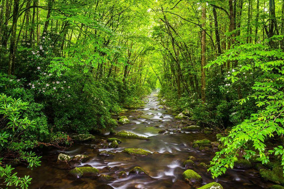 El Parque Nacional de las Grandes Montañas Humeantes (Great Smoky Mountains) , Estados Unidos