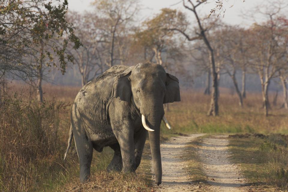 Kaziranga in Assam , India
