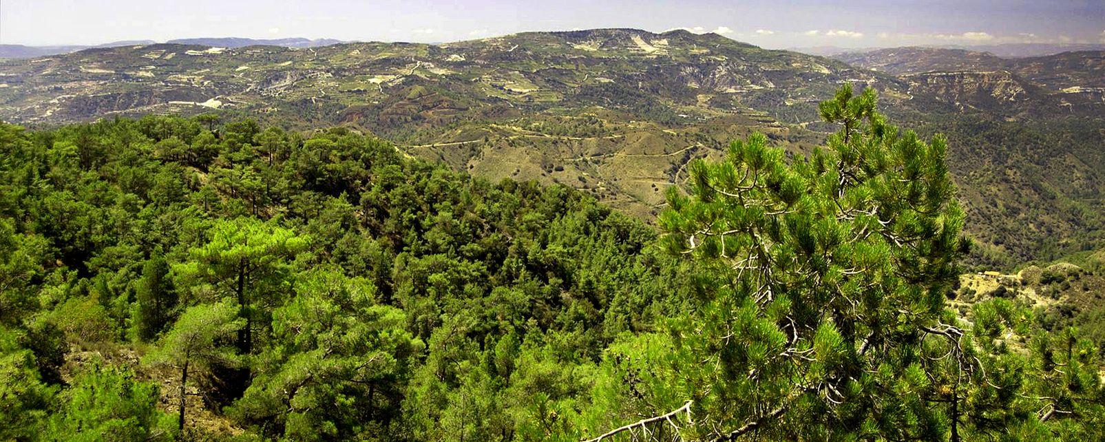 La faune et la flore des Troodos , Les forêts des Troodos , Chypre