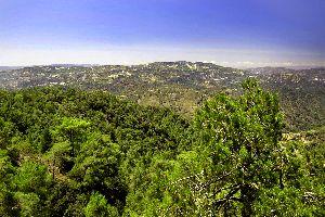 La fauna y la flora de los Troodos , Los bosques de Troodos , Chipre