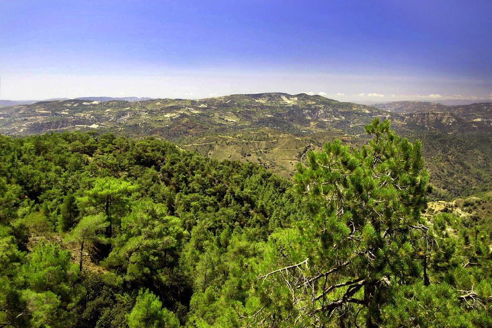 The fauna and flora of the Troodos , The forests of the Troodos , Cyprus