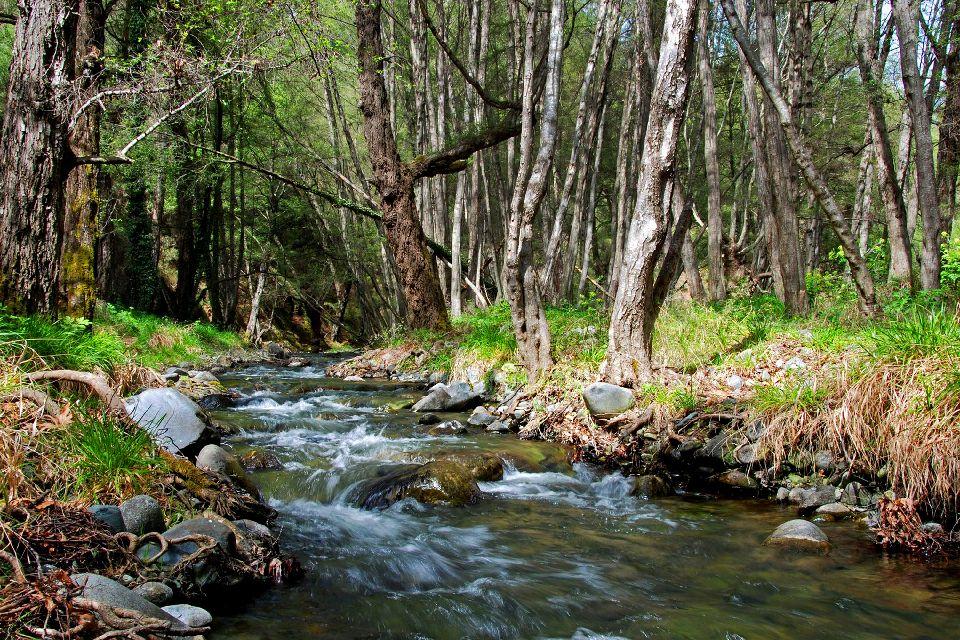 La faune et la flore des Troodos , Chypre, côté rivière , Chypre