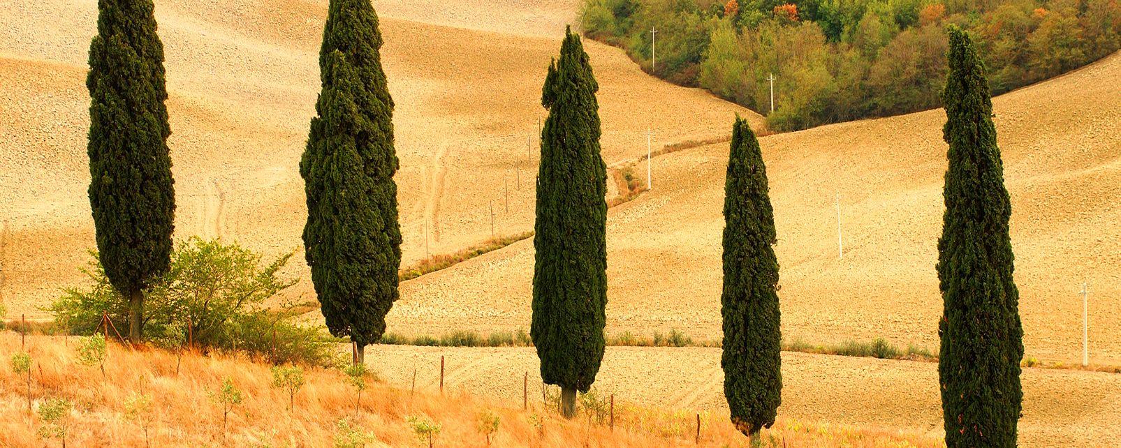Cultivos , Un campo de trigo después de la siega , Chipre