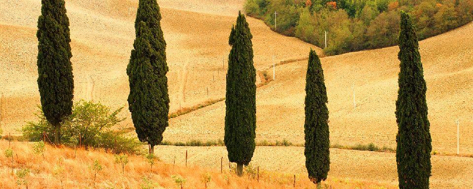 Un campo de trigo despu�s de la siega