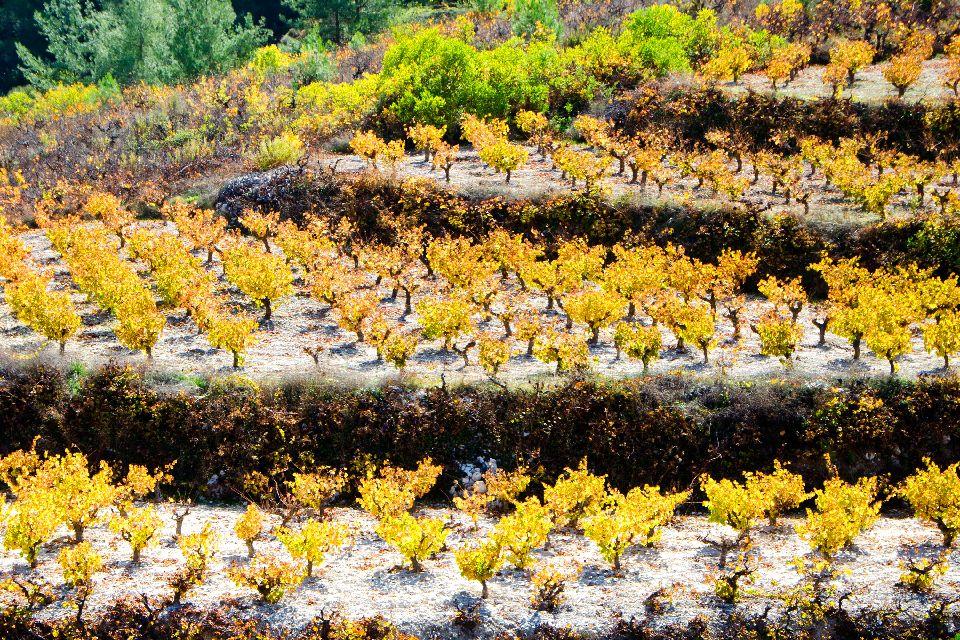 Cultivos , Viñas y vino de Chipre. , Chipre