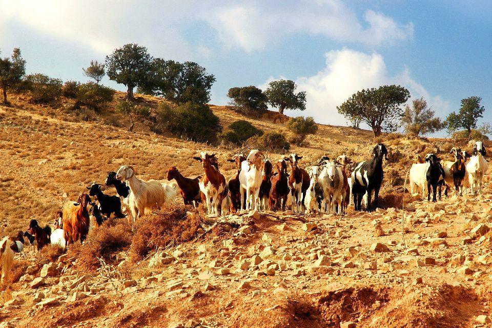 Cultivos , Cautividad y gastronomía , Chipre