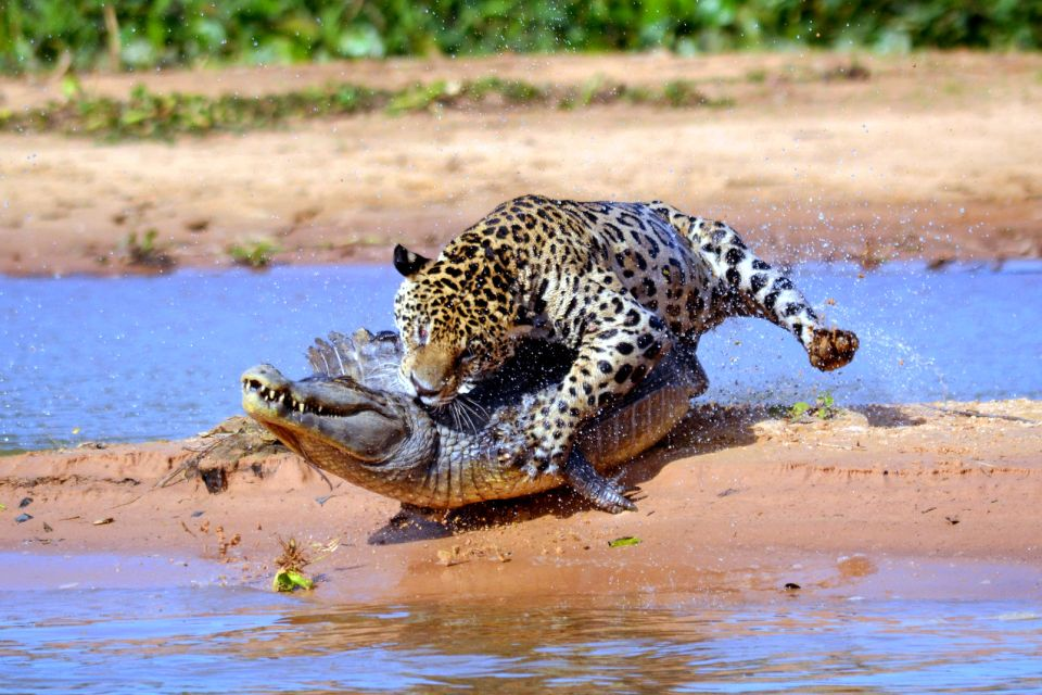 , Le Pantanal, Landscapes, Corumba, Brazil