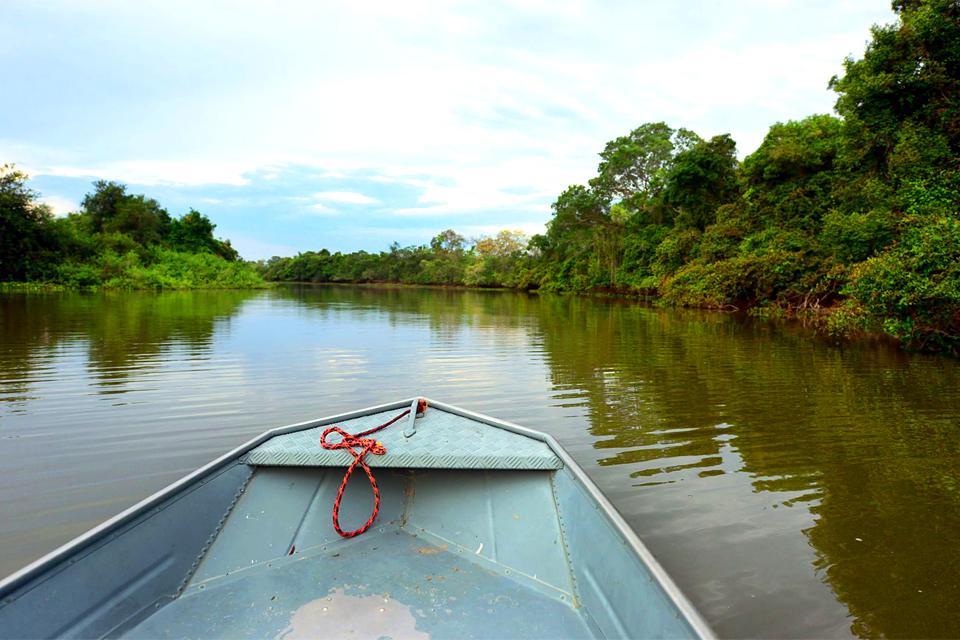 Le Pantanal , Brazil
