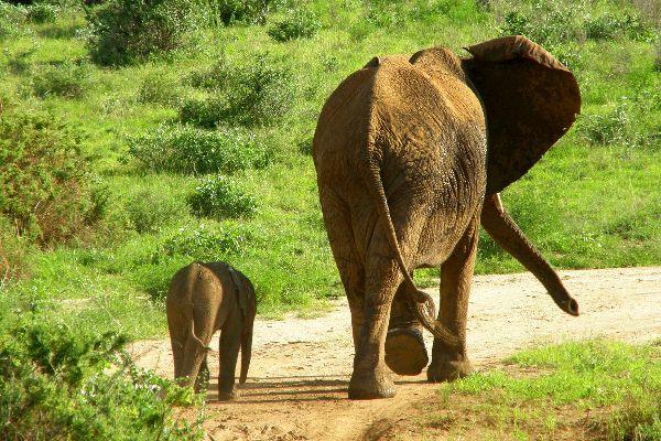 El Parque nacional de Naivasha , Kenia