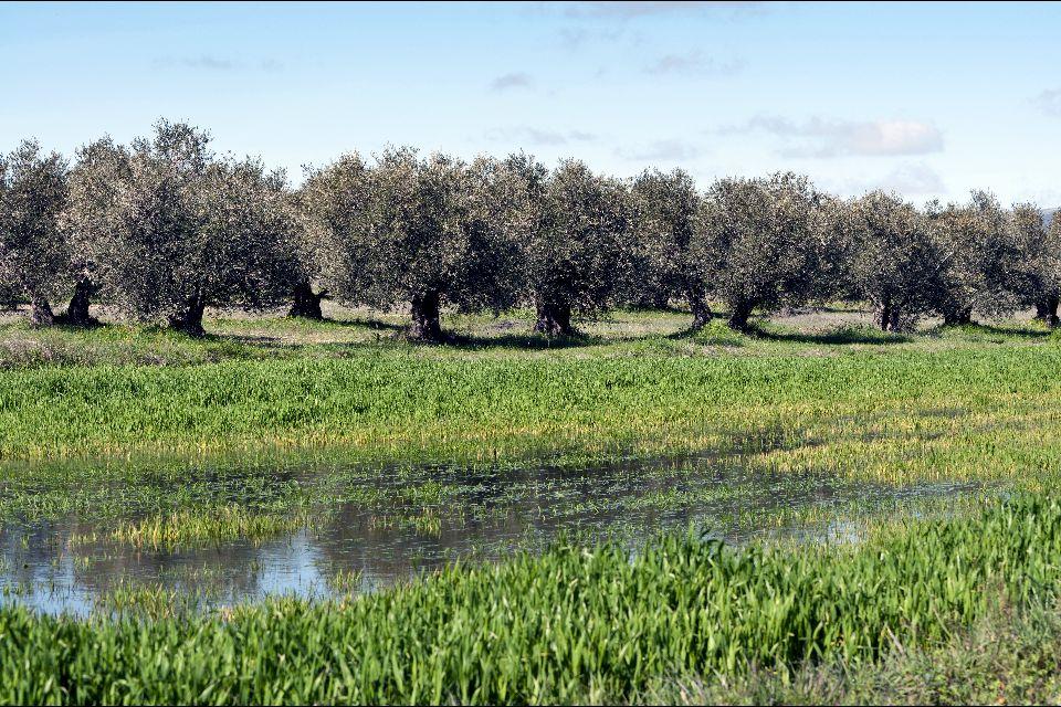 Les herbes de Provence et les olives , France