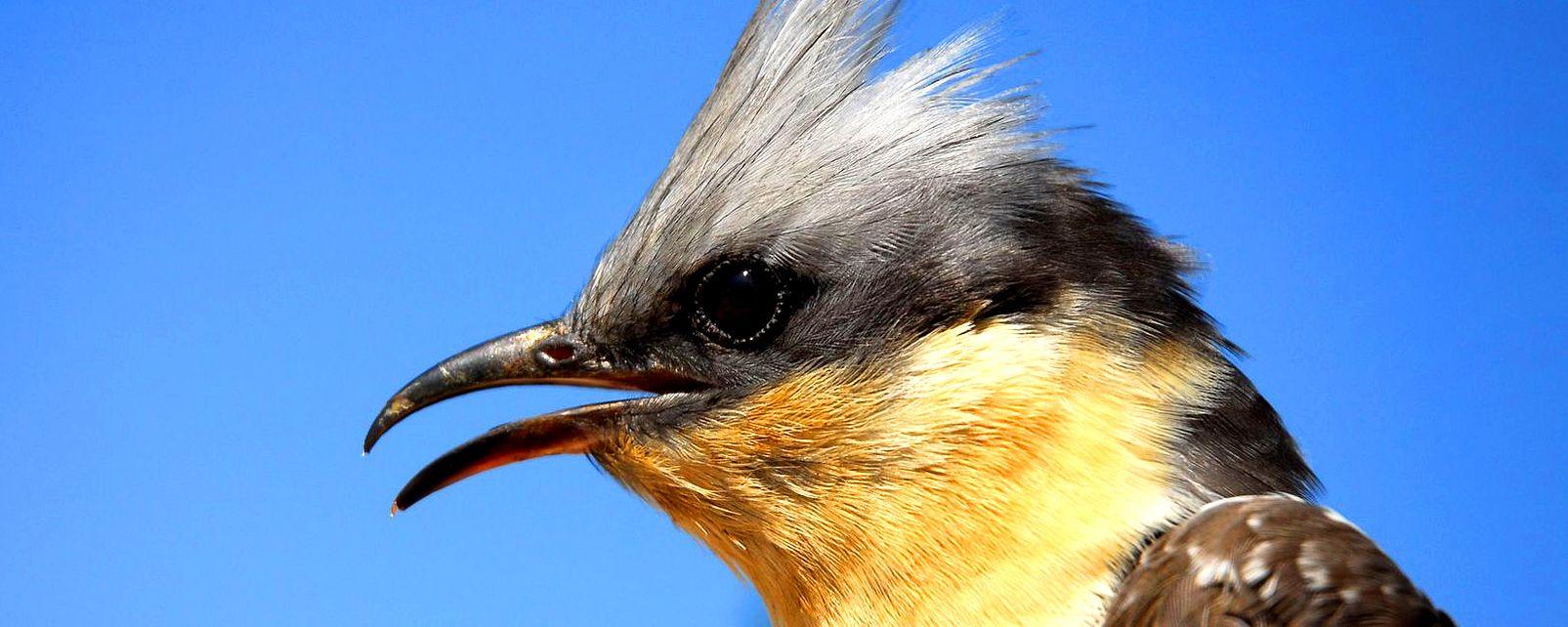 La faune et la flore, Oiseau Geai ciel bleu calanque Marseille faune France Europe
