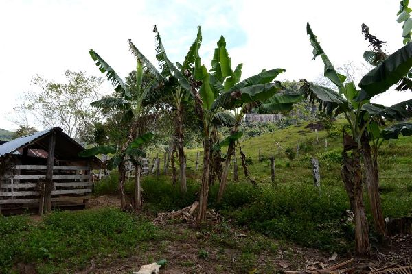 The region of Llanos , Colombia