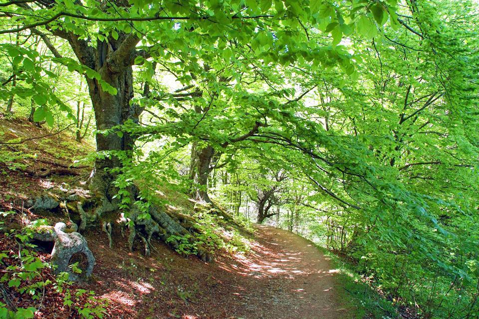 Torricchio Mountain Nature Reserve , Italie