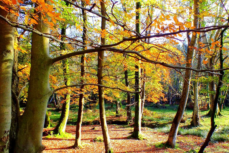 The New Forest , United Kingdom