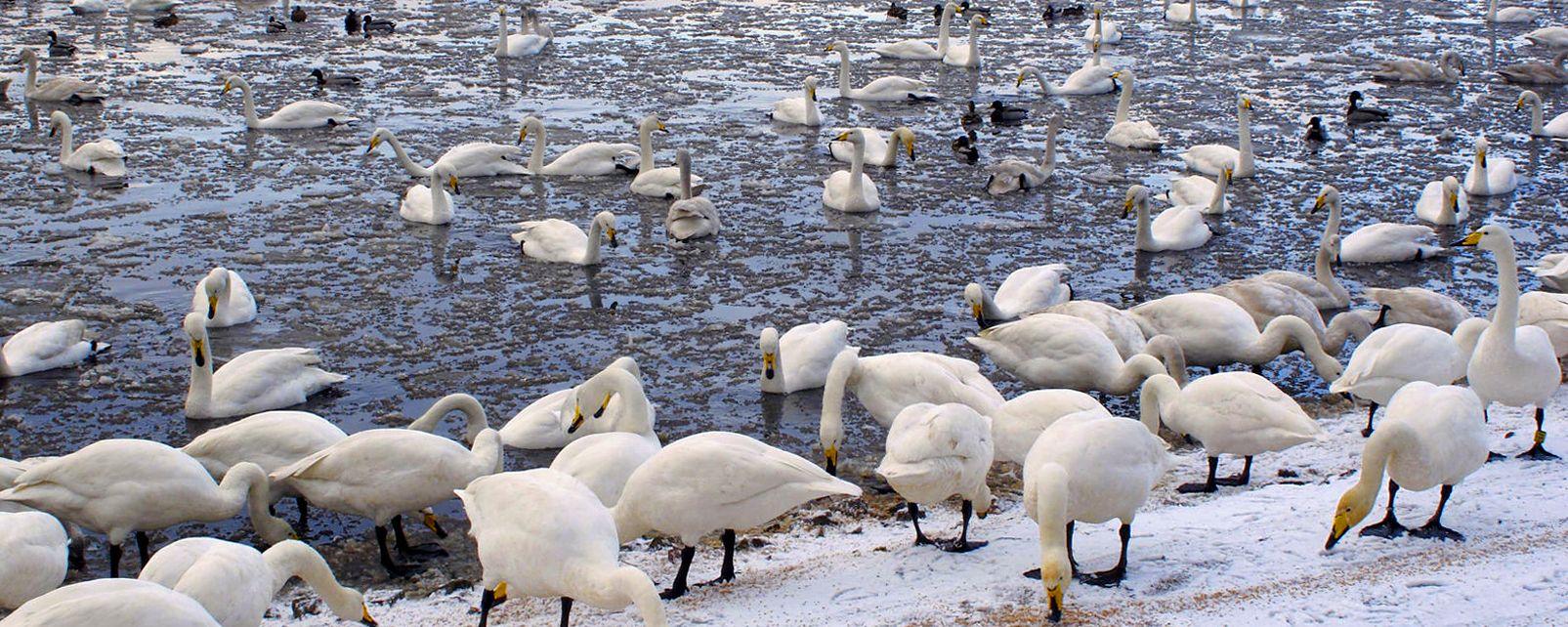 Martin Mere Wetlands , United Kingdom