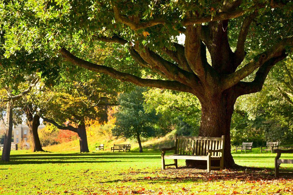 Jardins royaux de Kew , Pause bucolique , Royaume-Uni