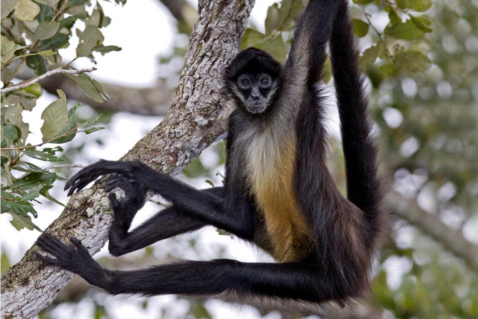 Reptilien Affen Raubkatzen V 246 Gel Kolumbien