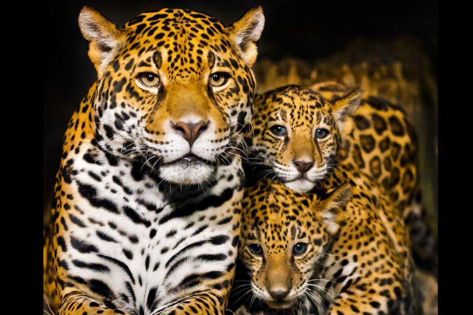 La fauna colombiana, Reptiles, monos, felinos, pájaros, La fauna, Colombia