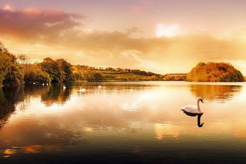 Glen Affric , Royaume-Uni