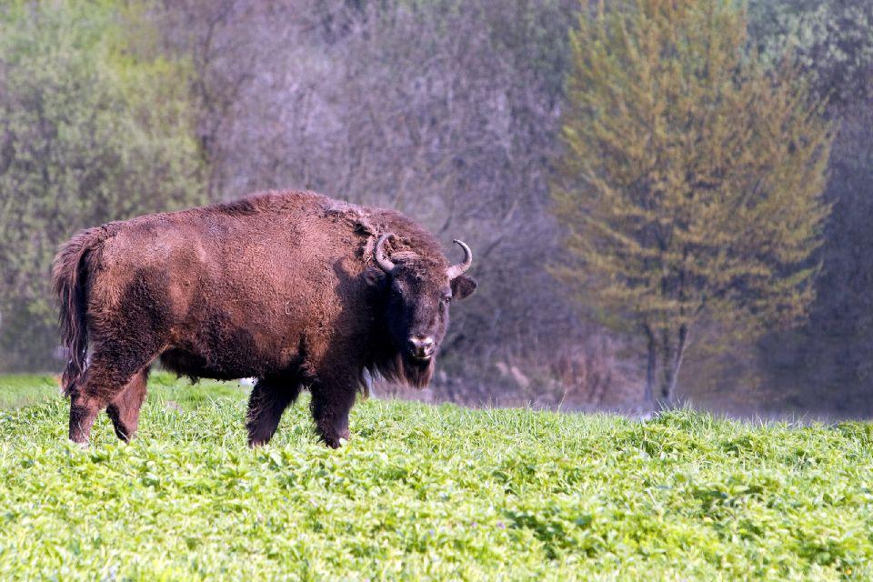 Padurea Domneasca Nature Reserve , Moldova