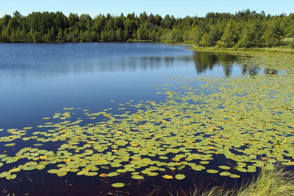 Plaiul Fagului Nature Reserve , Moldova