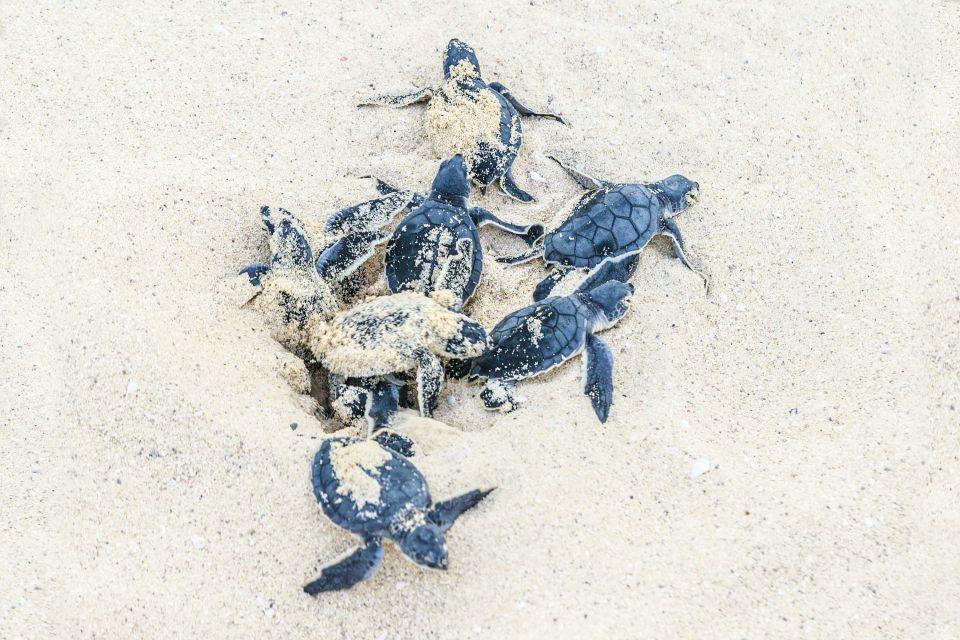 , Las tortugas verdes de Chissioua Quénéfou, Fauna y flora, Comoras