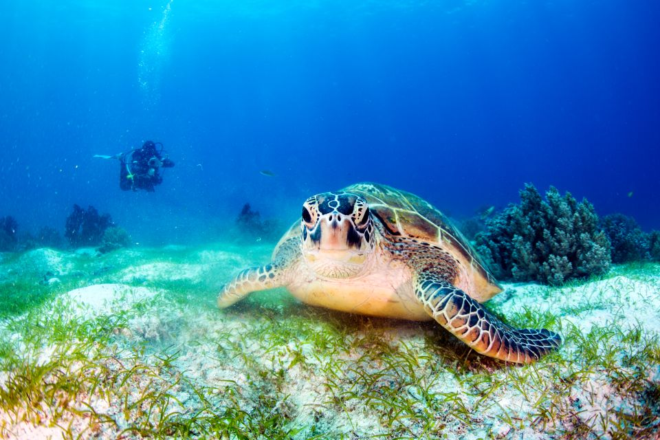 Las tortugas verdes de Chissioua Quénéfou, Fauna y flora, Comoras