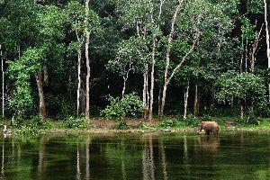 Los bosques , Congo