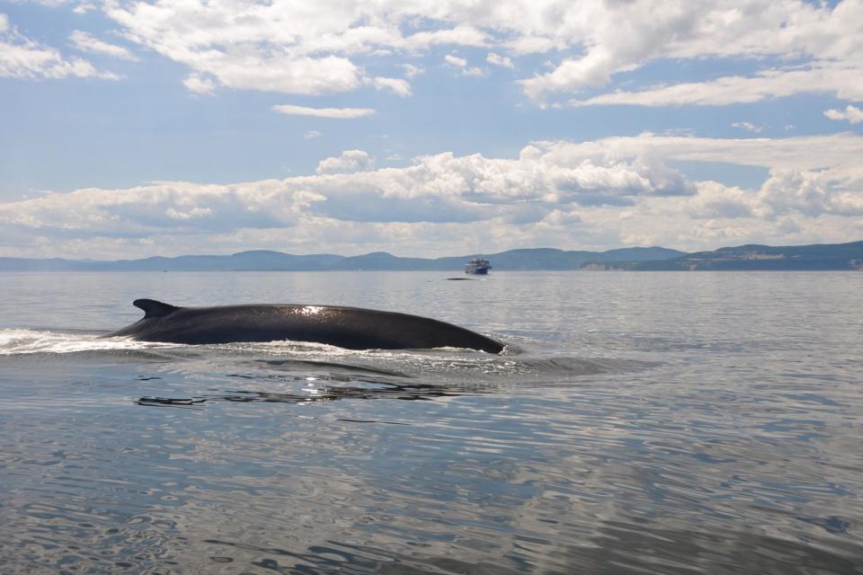 Les baleines , Canada