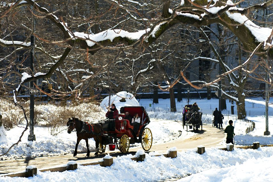 Central Park , Tour de calèche , Etats-Unis