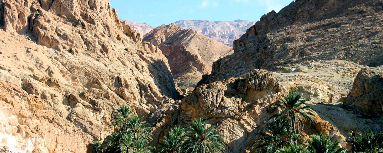 L'oasis de Tozeur, Les paysages, Tozeur, Tunisie