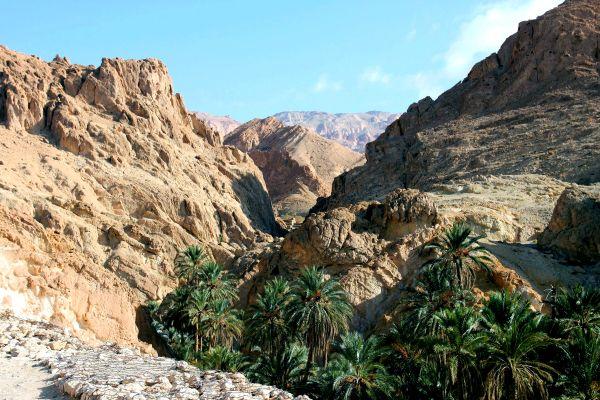 L'oasis de Tozeur , Tunisie