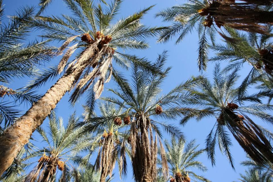 L'oasis de Tozeur , Les portes du désert , Tunisie