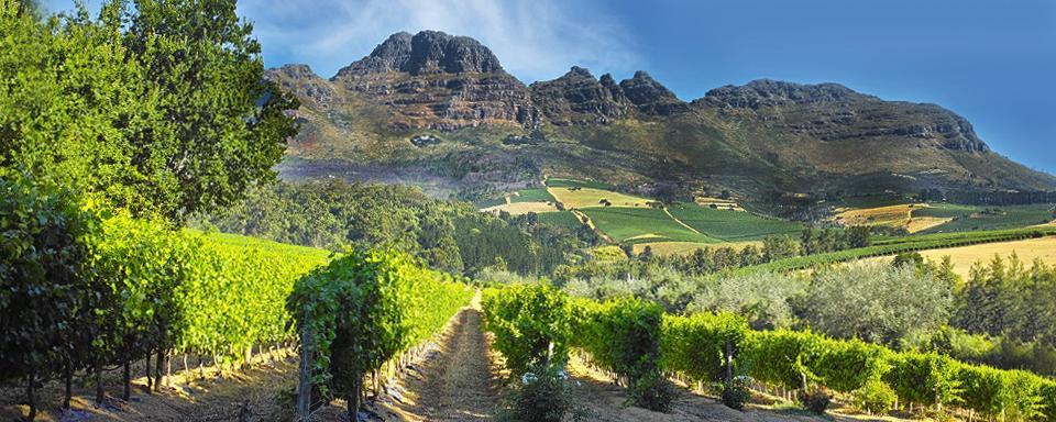 La Route Des Vignobles Winelands Afrique Du Sud