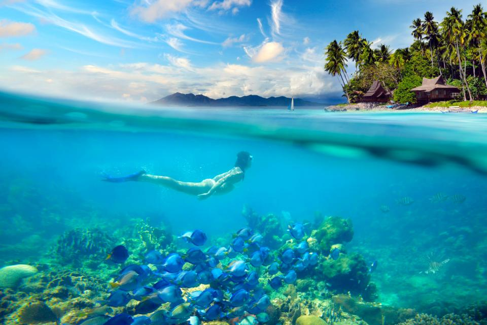 Sipadan Island , Les coraux de Sipadan , Malaisie